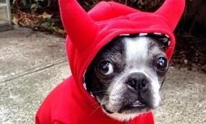 Halloween Pet Contest