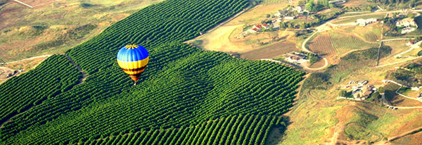 hot air ballon over vineyard
